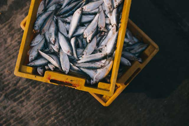 a box of sardines that is rich in omega-3
